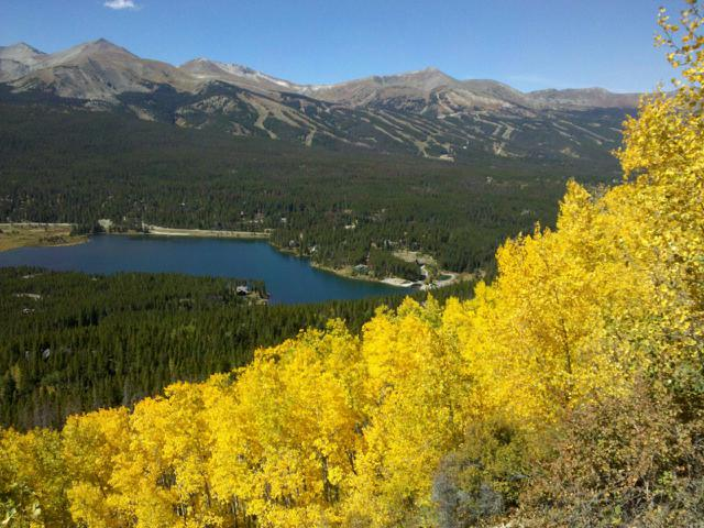 Fall leaves in Breckenridge Colorado