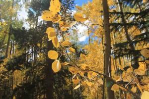 Fall in Breckenridge