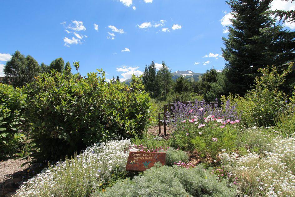 Alpine Garden 2