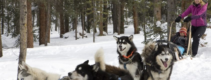 Dogsled in Breck this spring!