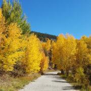 Fall leaves in Breckenridge