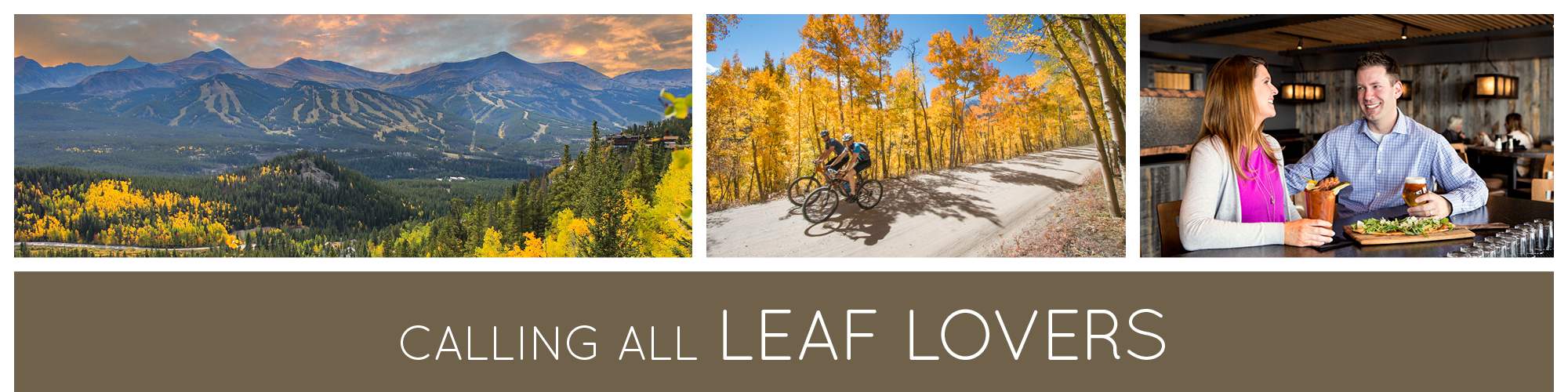 Calling All Leaf Lovers