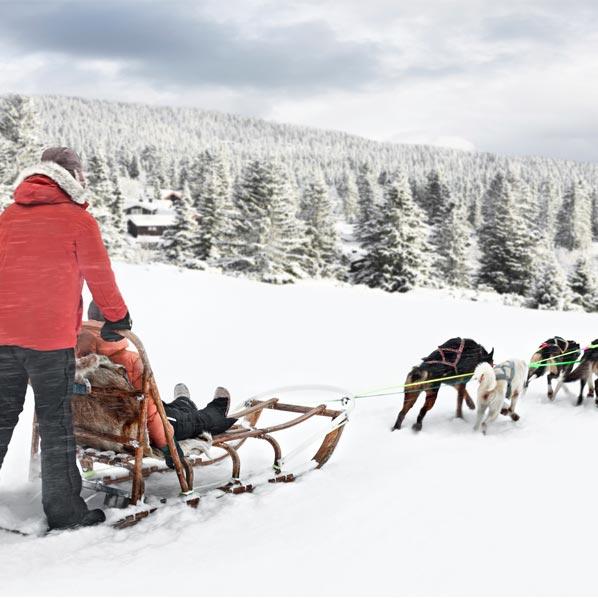 Breckenridge dog sledding